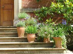 feeding epsom salt to potted plants