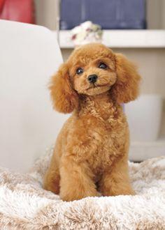 スマイルベイビー --愛犬の友 ヘアスタイルカタログ--