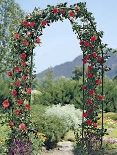 Best Trellis For Climbing Rose 2M GARDEN STEEL ROSE ARCH TRELLIS