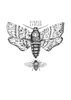 Kirbee Lawler Moth Specimens Open Edition A4 Art Print