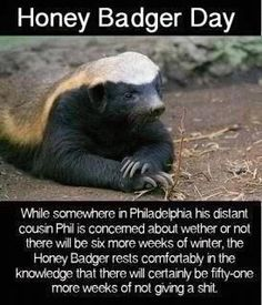 Every day should be honey badger day!!