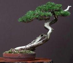 Single Tree, Bonsai Art, Planter Pots, Japan, Japanese
