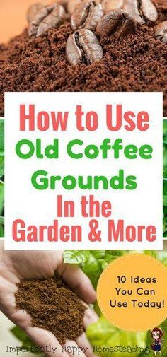 Ways to use coffee grounds in the garden #Organic_Gardening
