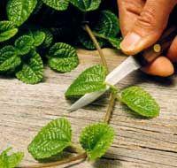Propagating Houseplants