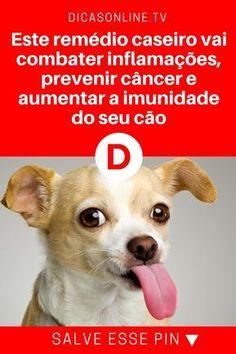 Remédio para cachorro | Este remédio caseiro vai combater inflamações, prevenir câncer e aumentar a imunidade do seu cão | O animal criado por você também pode (e deve) ser tratado com medicamentos caseiros. Este que vamos ensinar é muito poderoso e, entre outras coisas, combate inflamações, previne o câncer e aumenta a imunidade do animal. Aprenda.