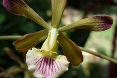 Descubrieron dos nuevas especies de orquídeas en Cuba