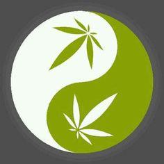 Absuelto dos veces de cultivar marihuana en casa para tratar su leucemia http://www.lavozdegalicia.es/noticia/galicia/2017/05/25/absuelto-dos-veces-cultivar-marihuana-casa-tratar-leucemia/0003_201705G25P12994.htm?utm_campaign=crowdfire&utm_content=crowdfire&utm_medium=social&utm_source=pinterest