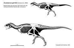 aucosaurus skeletaldrawing.com Scott Hartman