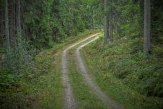 https://flic.kr/p/ad8Gwk | Skogsvägen 14 Augusti | En gammal skogsbilväg vindlar bort  genom granskogen  bort från sommaren gulnad av kantareller och klorofyll förlust