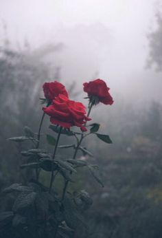 alternative, dark, flowers, grunge, hipster, indie, nature, pale, photography, roses, tumblr, First Set on Favim.com