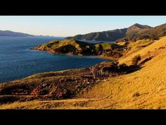 A scenic road-trip to the  Marlborough Sounds in New Zealand