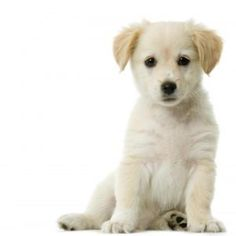 Like More Share More to Save Cute Dogs.