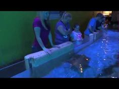 Visiting Winter The Dolphin From Dolphin's Tale At Clearwater Aquarium Marine Fl March 2013 - YouTube