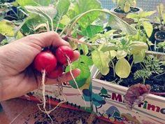 ¡¡¡YA ES PRIMAVERA!!! Visita nuestros kits de cultivo en Hansel y Gretel, Regalos y Juguetes:   https://hanselygretel.eu
