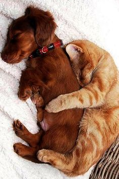 Cat ❤ ️dog cute pets, cute puppies and kittens, cute dogs and cats, animals Cute Kittens, Cute Cats And Dogs, Cute Dogs And Puppies, Animals And Pets, Cats And Kittens, Doggies, Animals Images, Adorable Dogs, Dogs In Love