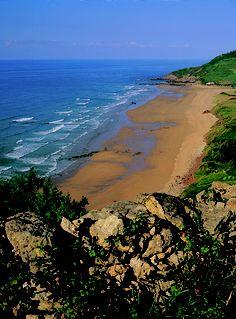 Playa de Vega, Ribadesella. Esta playa se extiende 1,5 kilómetros con arena fina. Constituye uno de los puntos del litoral asturiano de mayor interés botánico, en virtud de su variada flora dunar y en, particular de su población de la planta conocida como mosquitas doradas, exclusiva de este arenal de la región. Dichos valores justifican su inclusión en la red regional de espacios naturales protegidos con categoría de monumento natural. Huellas de dinosaurio en las paredes de los acantilad