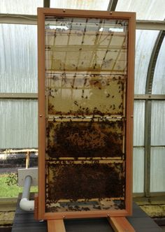 Honey Bee Hive #BeeHive #HoneyBees #SavetheBees #Buffalo #Gardens