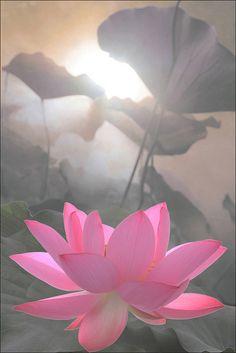 Pink Flower / lotus IMG_9894-2-800-pink     Pink thing: