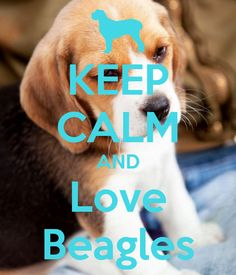 KEEP CALM AND Love Beagles by Maisi