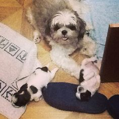 Mommy and babies  #mabmab #littleching #littlechung #dogtime #bedtime