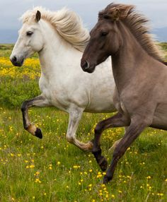 Run like the wind with your very best friend
