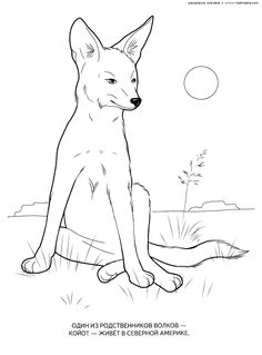 Wild Animals Coloring Pages 15