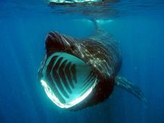 Basking sharks spotted just meters off Achill Island (VIDEO)