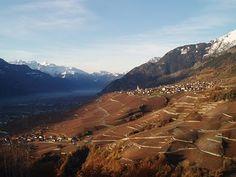 Les vignes du Valais Suisse