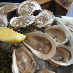 fresh oysters from Lure in Atlanta, GA.