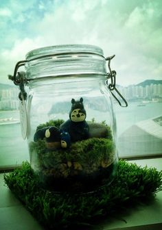Custom Totoro Terrarium Found at by Nancy's office window.