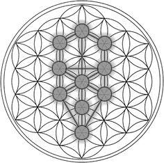 LA FLOR DE LA VIDA        La Flor de la Vida es el nombre dado a una mística figura geométrica que se compone de varios círculos superpuest...