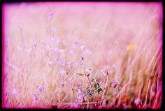 * by Der Ohlsen, via Flickr
