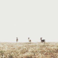 Pinterest ♢ @christianaes