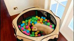 This pug who knows just how to appreciate a ball pit. | The 38 Most Majestic Pugs Of 2014