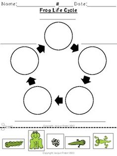 Worksheets Life Cycle Of A Frog Worksheet 1000 ideas about frog life cycles on pinterest butterfly cycle and toad