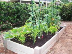 easy vegetable garden...