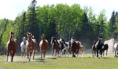 """Become Part of the """"Wildhorse Family"""" in Alberta, Canada - workaway.info  (Do chores around the ranch in exchange for horseriding lessons!!!)"""