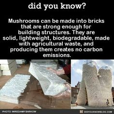 Mushrooms can be made into bricks that are strong enough for building structures. They are solid, lightweight, biodegradable, made with agricultural waste, and producing them creates no carbon emissions. The More You Know, Good To Know, Did You Know, Save Our Earth, Save The Planet, Angst Quotes, Wtf Fun Facts, Random Facts, Crazy Facts