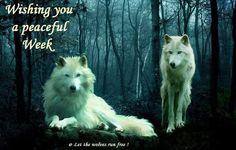 Wishing u a peaceful week