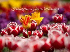 Herbstpflanzung von Frühlingsblühern und Stauden ⋆ LeLiFe by LeLiFe