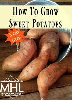 How to grow sweet potatoes in 5 easy steps. Growing this nutrient-dense food is easier than you think. You can grow sweet potatoes to eat or as a plant.