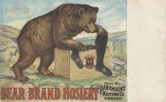 Postcard Advertising Bear Brand Hosiery Paramount Knitting Co Chicago IL Vintage Tags, Vintage Postcards, Knitting Bear, Walk In The Woods, Vintage Branding, Chicago Illinois, Boy Scouts, Vintage Advertisements, Ads
