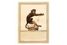 Rhesus Macaque, 1812 on OneKingsLane.com