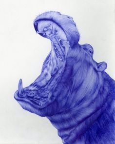 blue bic hippo