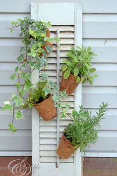 Repurpose an old shutter to hang plants off of