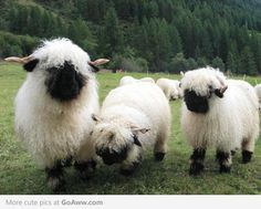Larry, Curly, and Moe fuzzy: black-nosed Sheep - goaww.com