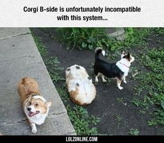 Corgi Has Stopped Working
