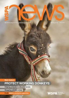 Read the spring 2014 edition of #WSPA News, the magazine for World Society for the Protection of Animals (WSPA) supporters.