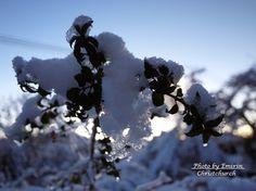 雪の翌朝 / winter morning **from Christchurch, New Zealand**