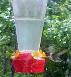 How to make your own humming bird food.